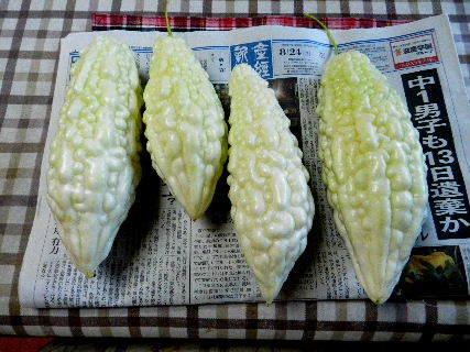2015-08・24 我が家のスナップ (1).JPG
