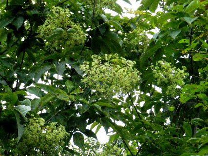 2015-09・24 樹木に花が・・・ (1).JPG