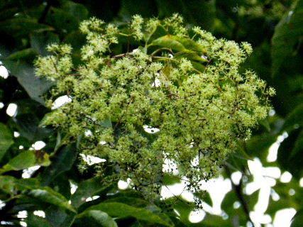 2015-09・24 樹木に花が・・・ (2).JPG