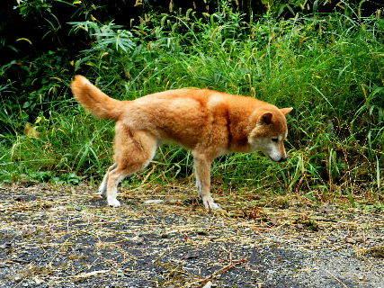 2015-09・25 我が家の悪餓鬼.JPG