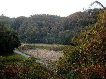 2015-11・22 里山も落葉が始って (3).JPG