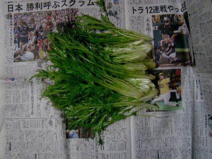 2015-11・28 我が家のスナップ (1).JPG