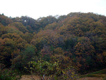 2015-11・29 里山も冬の気配に (1).JPG
