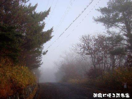 2015-12・24 朝霧の里山光景を・・・ (2).JPG