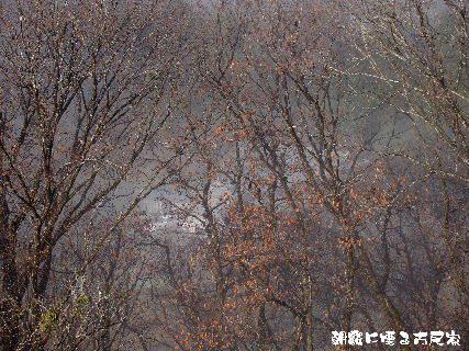 2015-12・24 朝霧の里山光景を・・・ (6).JPG