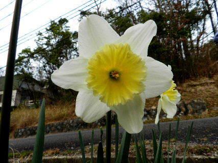 2016-03・22 散歩道脇で咲く花達・・・ (3).JPG