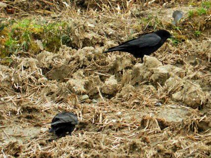 2016-03・22 里山の野鳥達・・・ (4).JPG
