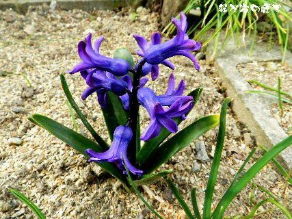 2016-03・25 我が家の庭で・・・.JPG