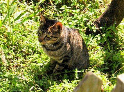 2016-08・30 里山の野良猫・・・ (1).JPG