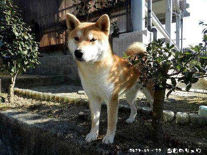 2017-03・12 今日のリュウ・・・ (3).JPG