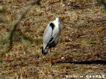 2017-03・16 里山の野鳥達・・・ (1).JPG