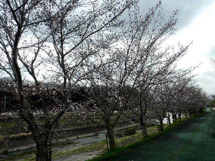 2017-04・06 里山の春を彩る花達 (8).JPG