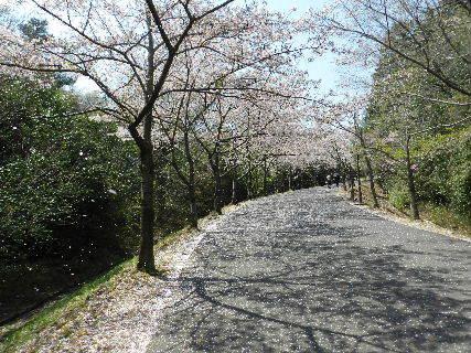 2017-04・14 播磨中央公園にて・・・ (3).JPG