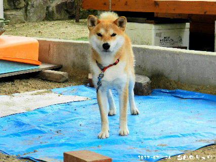 2017-07・16 今日のリュウ・・・ (1).JPG