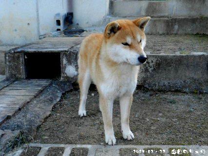 2007-02・22 今日のリュウ・・・ (1).JPG