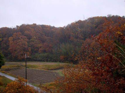 2015-12・11 雨の里山光景 (2).JPG