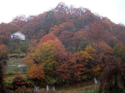 2015-12・11 雨の里山光景 (3).JPG