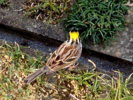 2016-02・07 里山の野鳥達・・・ (4).JPG