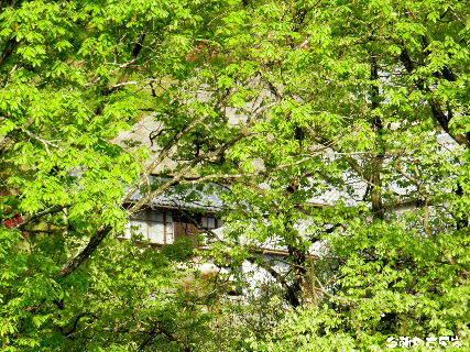 2016-04・23 今朝の古民家.JPG