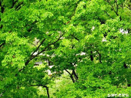 2016-04・29 今朝の古民家.JPG