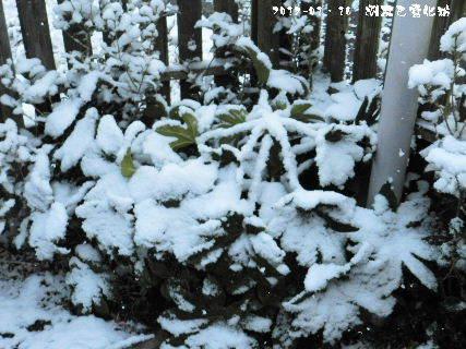 2017-01・16 雪化粧の樹木 (3).JPG
