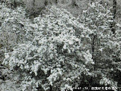 2017-01・16 雪化粧の樹木 (4).JPG