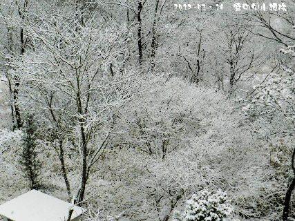 2017-01・16 雪化粧の樹木 (5).JPG
