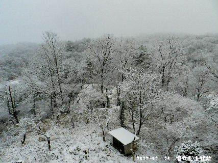 2017-01・16 雪化粧の里山模様・・・ (2).JPG