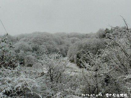 2017-01・16 雪化粧の里山模様・・・ (4).JPG