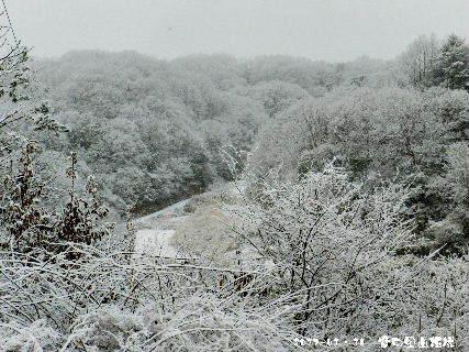 2017-01・16 雪化粧の里山模様・・・ (5).JPG