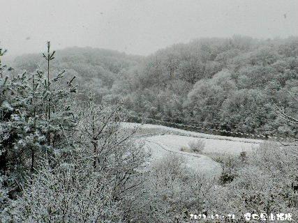 2017-01・16 雪化粧の里山模様・・・ (6).JPG