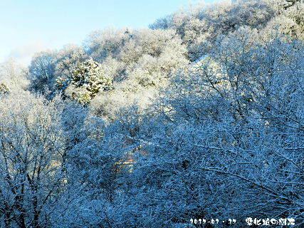 2017-01・17 雪化粧の樹木 (1).JPG