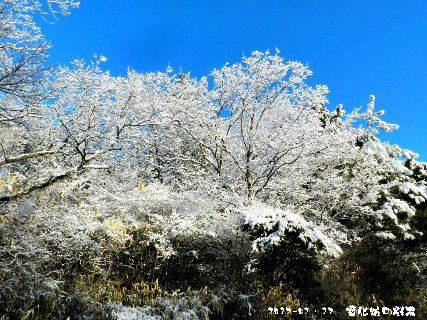 2017-01・17 雪化粧の樹木 (2).JPG