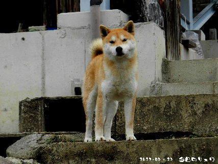 2017-03・23 今日のリュウ・・・ (1).JPG