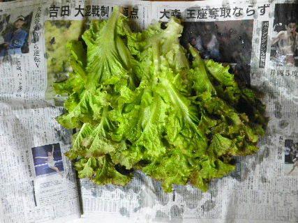 2017-06・27 我が家のスナップ・・・ (3).JPG