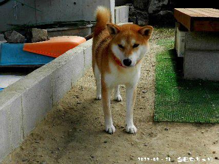 2017-08・16 今日のリュウ・・・ (1).JPG