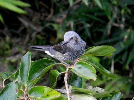 2017-09・22 里山の野鳥達・・・ (3).JPG
