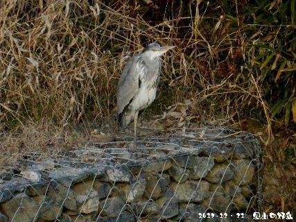 2017-12・21 里山の野鳥・・・.JPG