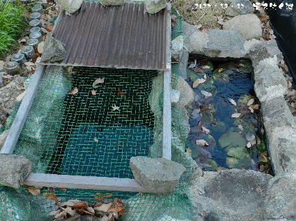 2017ー12・13 凍て付く池・・・.JPG